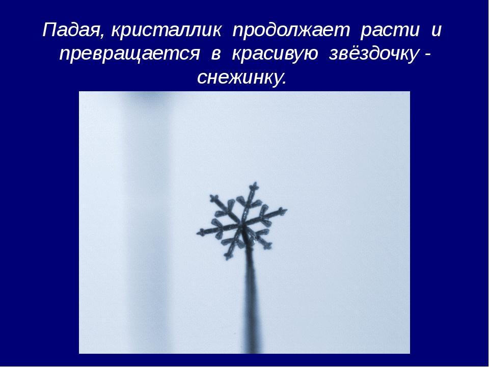 Падая, кристаллик продолжает расти и превращается в красивую звёздочку - снеж...
