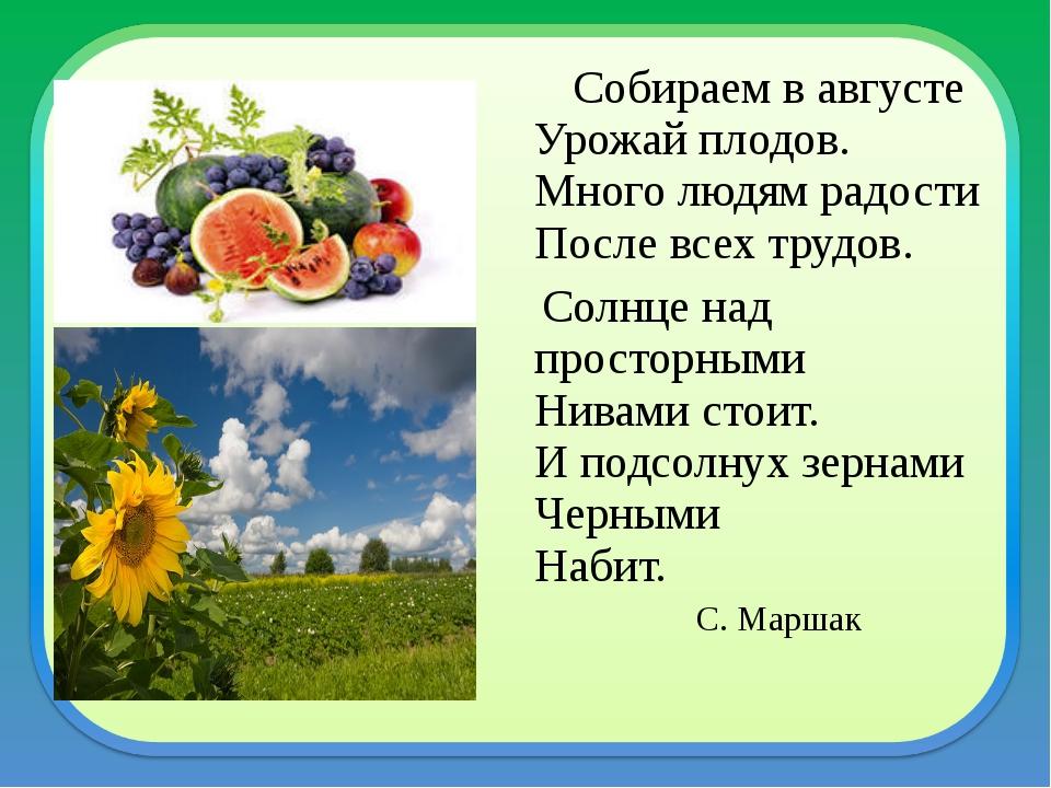 Собираем в августе Урожай плодов. Много людям радости После всех трудов. Сол...