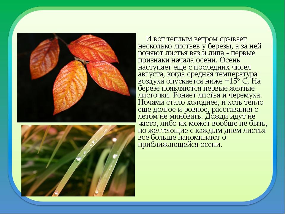 И вот теплым ветром срывает несколько листьев у березы, а за ней ро...