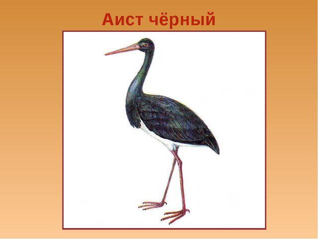 Аист чёрный