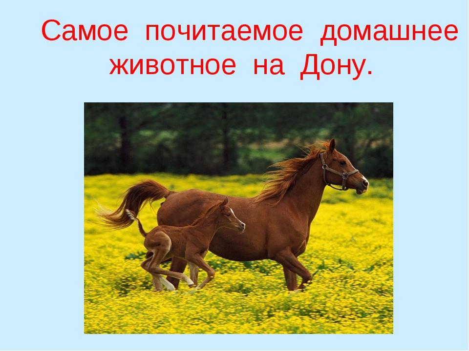 Самое почитаемое домашнее животное на Дону.