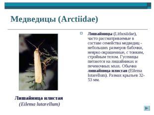 Медведицы (Arctiidae) Лишайницы (Lithosiidae), часто рассматриваемые в соста
