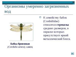 Организмы умеренно загрязненных вод К семейству бабок (Corduliidae) относятся