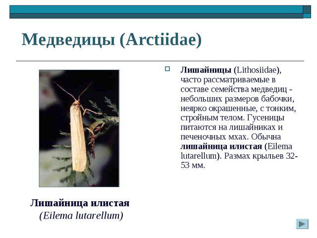 Медведицы (Arctiidae) Лишайницы (Lithosiidae), часто рассматриваемые в соста...