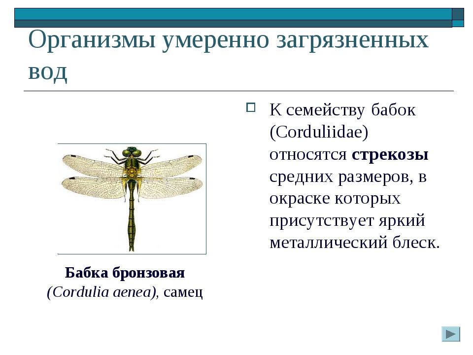 Организмы умеренно загрязненных вод К семейству бабок (Corduliidae) относятся...