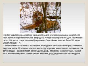 На этой территории представлено очень много редких и исчезающих видов, значи