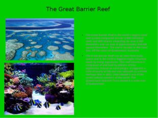 The Great Barrier Reef The Great Barrier Reef is the world's largest coral re