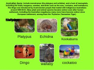 Australian fauna include monotremes (the platypus and echidna), and a host of