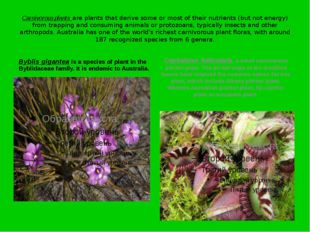 Carnivorous plants are plants that derive some or most of their nutrients (bu