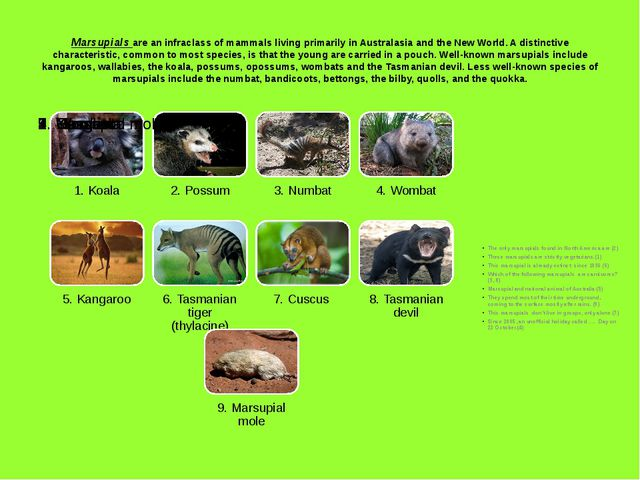 Marsupials are an infraclass of mammals living primarily in Australasia and t...