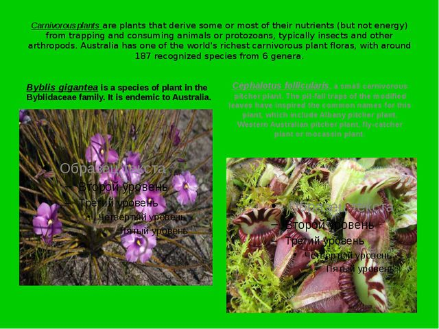 Carnivorous plants are plants that derive some or most of their nutrients (bu...