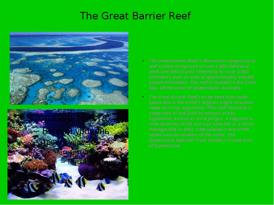 The Great Barrier Reef The Great Barrier Reef is the world's largest coral re...