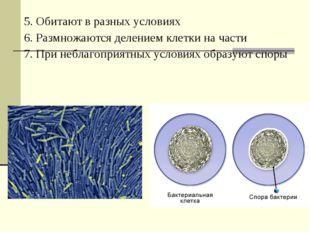 5. Обитают в разных условиях 6. Размножаются делением клетки на части 7. При