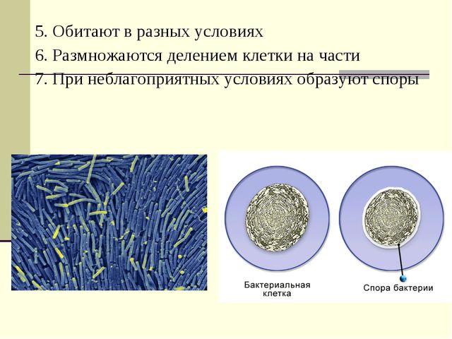 5. Обитают в разных условиях 6. Размножаются делением клетки на части 7. При...