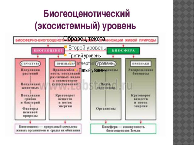 Биогеоценотический (экосистемный) уровень