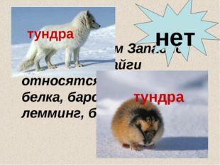 К обитателям Западно-Сибирской тайги относятся: бурундук, белка, барсук, песе