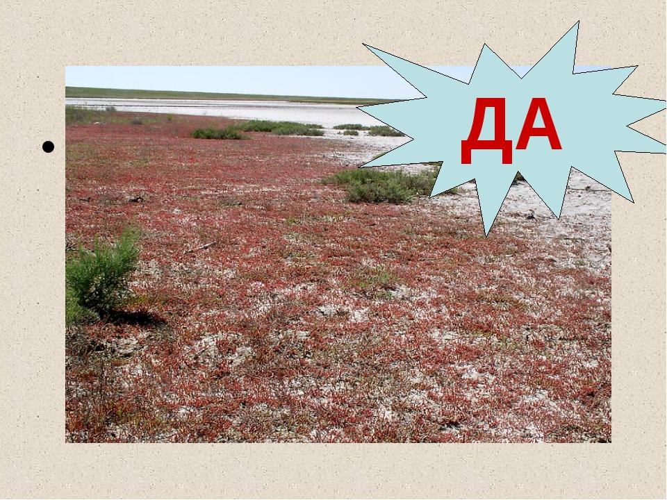 На юге в условиях недостаточного увлажнения формируются солонцы и солончаки. ДА