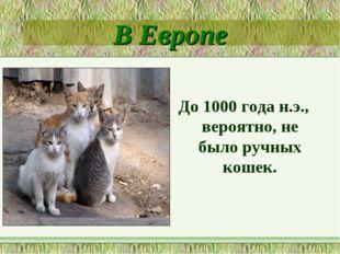 В Европе До 1000 года н.э., вероятно, не было ручных кошек.