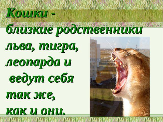 Кошки - близкие родственники льва, тигра, леопарда и ведут себя так же, как и...