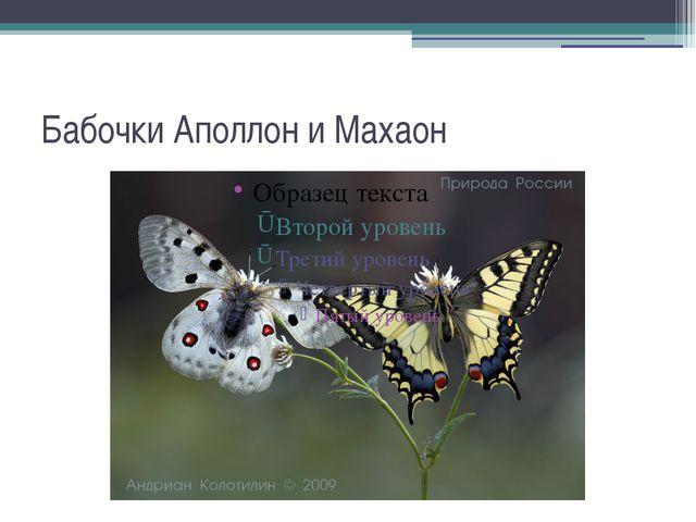 Бабочки Аполлон и Махаон