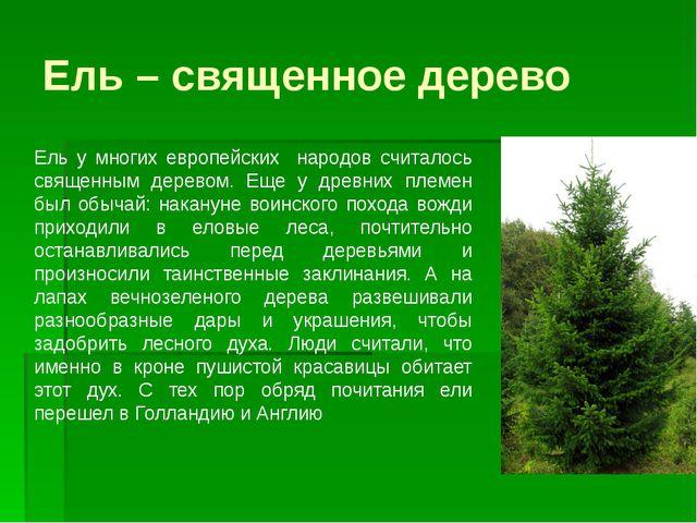 Ель – священное дерево Ель у многих европейских народов считалось священным д...