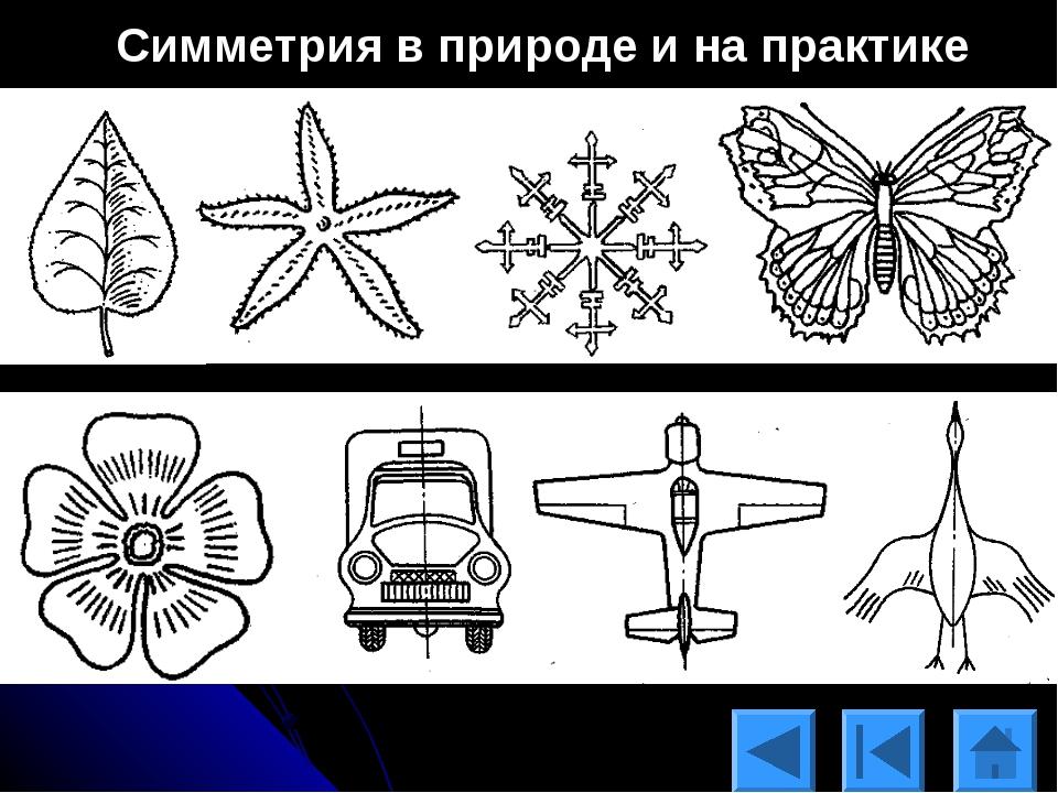 примеры симметрии в природе картинки для надежная, что