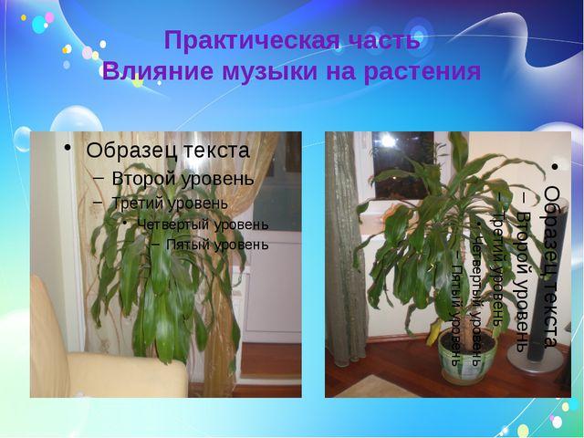 Практическая часть Влияние музыки на растения