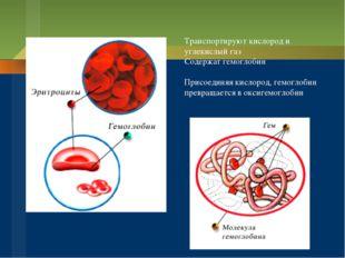 Транспортируют кислород и углекислый газ Содержат гемоглобин Присоединяя кисл