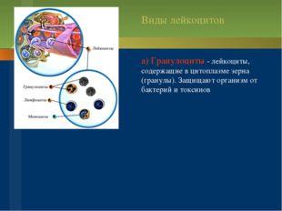 а) Гранулоциты - лейкоциты, содержащие в цитоплазме зерна (гранулы). Защищаю