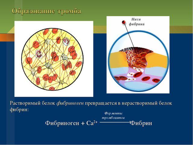 Растворимый белок фибриноген превращается в нерастворимый белок фибрин: Фибри...