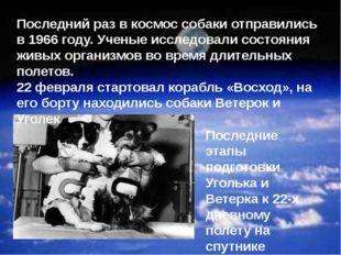 Последние этапы подготовки Уголька и Ветерка к 22-х дневному полету на спутни