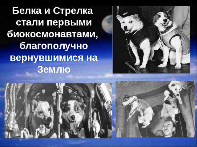 Белка и Стрелка стали первыми биокосмонавтами, благополучно вернувшимися на З...