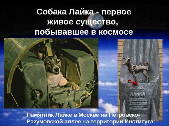 Собака Лайка - первое живое существо, побывавшее в космосе Памятник Лайке в М...