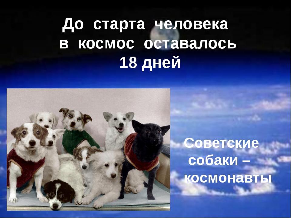 До старта человека в космос оставалось 18 дней Советские собаки – космонавты