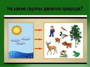 На какие группы делится природа?