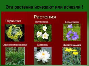 Эти растения исчезают или исчезли !