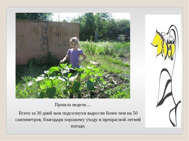 Прошла неделя… Всего за 30 дней мои подсолнухи выросли более чем на 50 сантим...