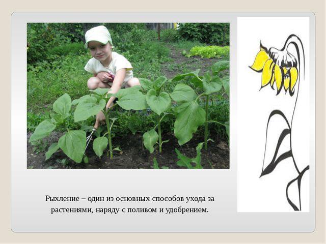 Рыхление – один из основных способов ухода за растениями, наряду с поливом и...