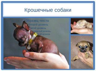Крошечные собаки