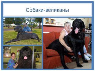 Собаки-великаны
