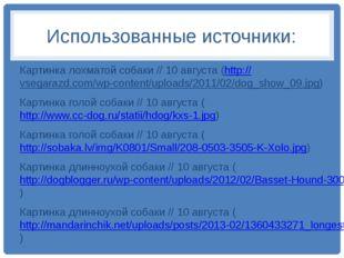 Использованные источники: Картинка лохматой собаки // 10 августа (http://vseg