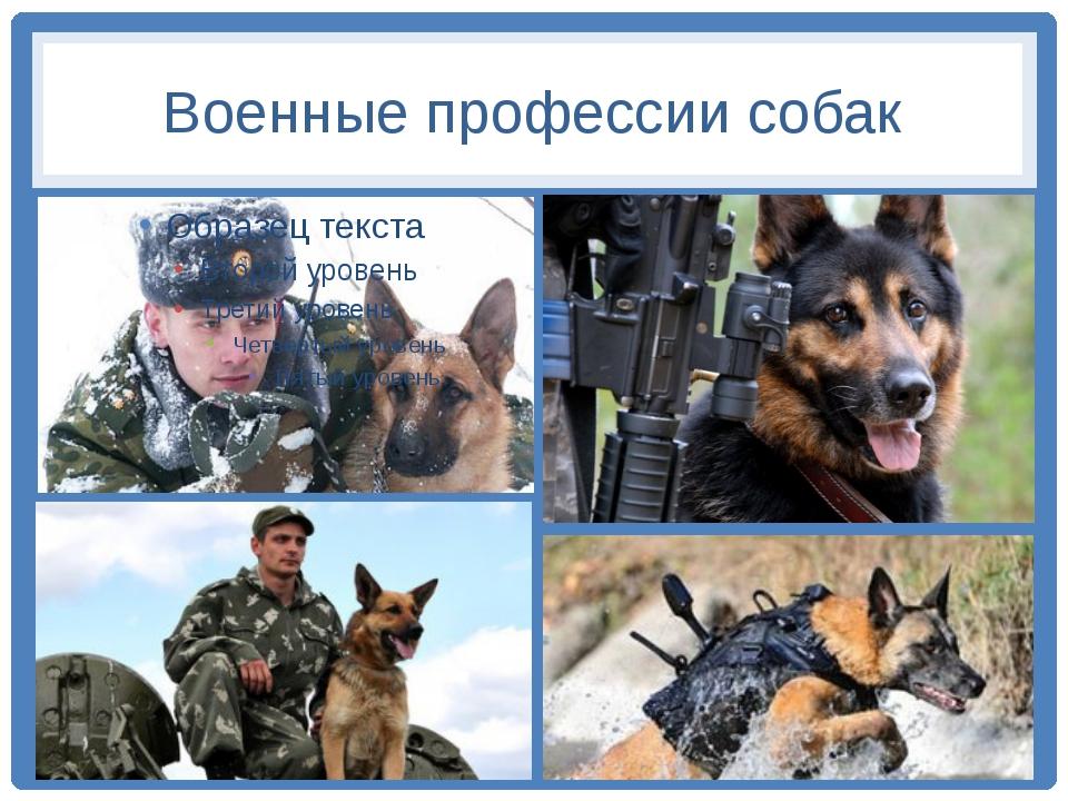 Военные профессии собак