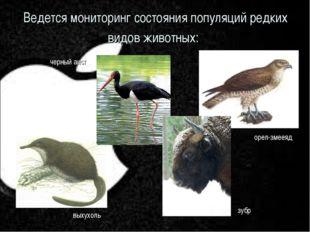 Ведется мониторинг состояния популяций редких видов животных: черный аист вых