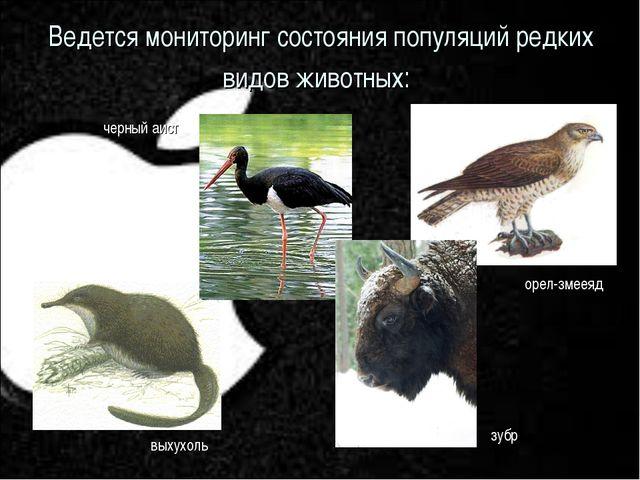 Ведется мониторинг состояния популяций редких видов животных: черный аист вых...