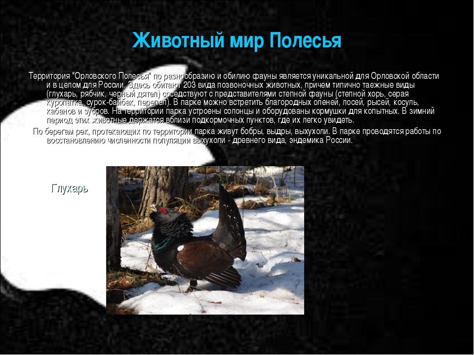 """Животный мир Полесья Территория """"Орловского Полесья"""" по разнообразию и обилию..."""