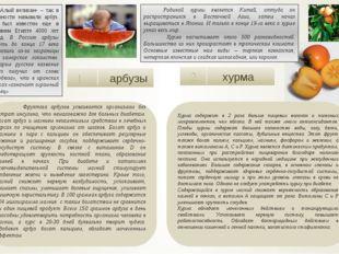арбузы 1 хурма 2  Фруктоза арбузов усваивается организмом без затрат инсули