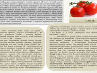 томаты 4 В плодах содержатся такие сахара, как фруктоза, раффиноза, вербаско