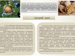грецкий орех 5 В нем содержится значительное количество жира, белковые вещес