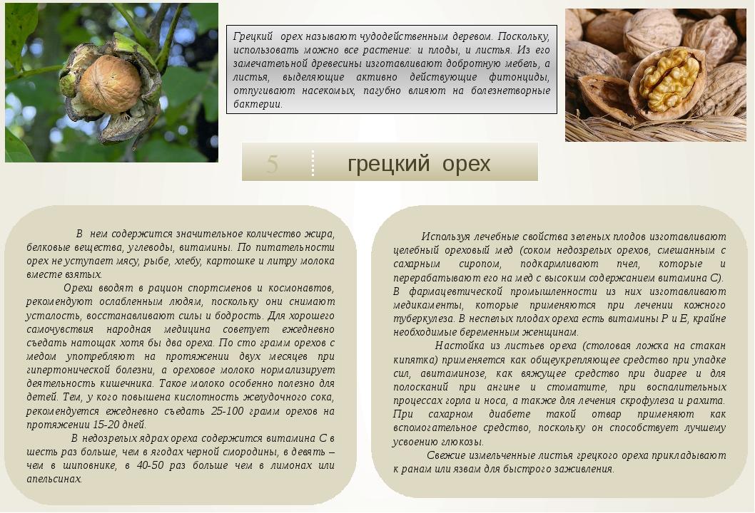 грецкий орех 5 В нем содержится значительное количество жира, белковые вещес...