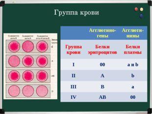 Группа крови  Агглютино- гены Агглюти- нины Группа крови Белки эритроцитов Б